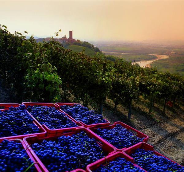 correlato_Paesaggi vitivinicoli del Piemonte: Langhe-Roero e Monferrato