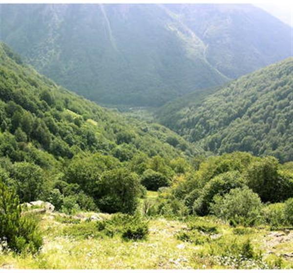 correlato_Antiche faggete primordiali dei Carpazi e di altre regioni d'Europa,  sito transnazionale, in Italia 13 faggete